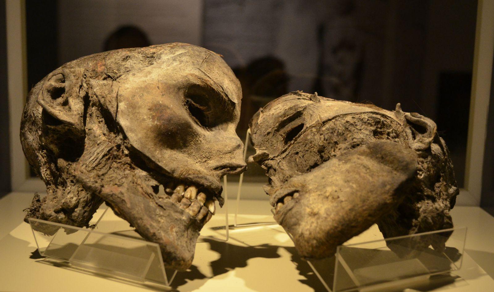 Múmia és prostatitis Vélemények